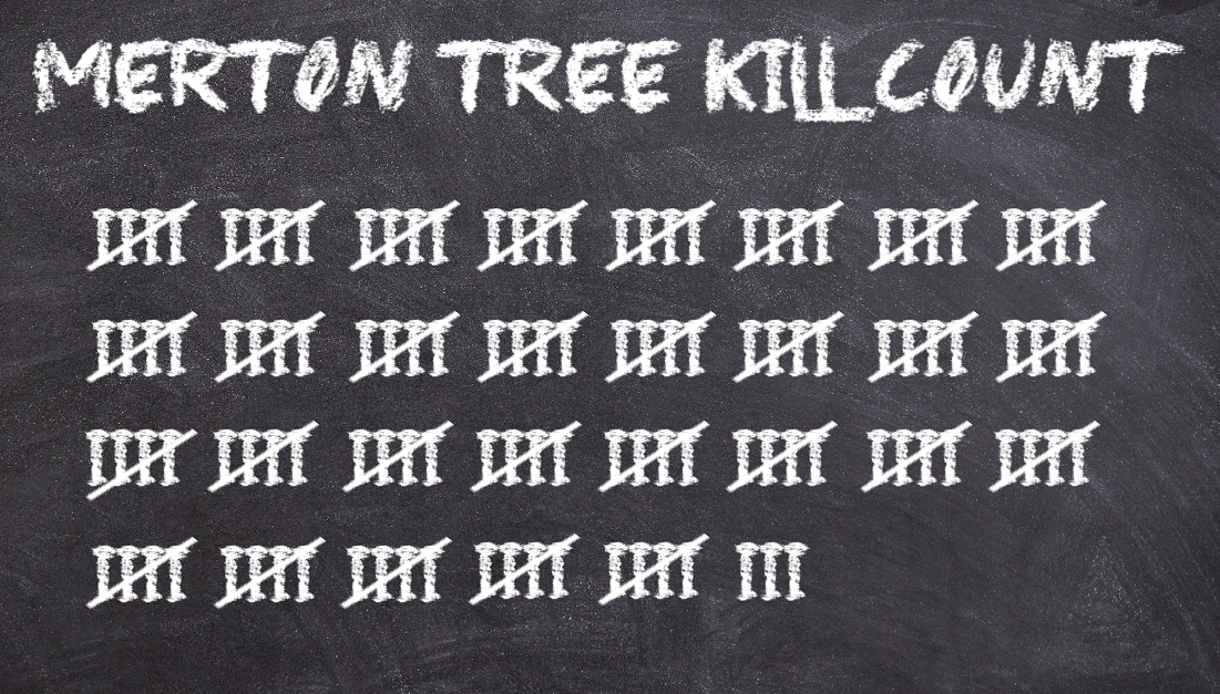 Merton Trees Killed